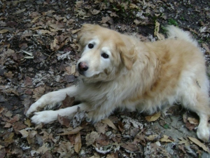 We lost our beloved golden retriever, Lucky, to cancer. Dec.31 was a sad day. Clinging to life, despite the complete loss of appetite, for weeks, can teach us humans how precious life is.